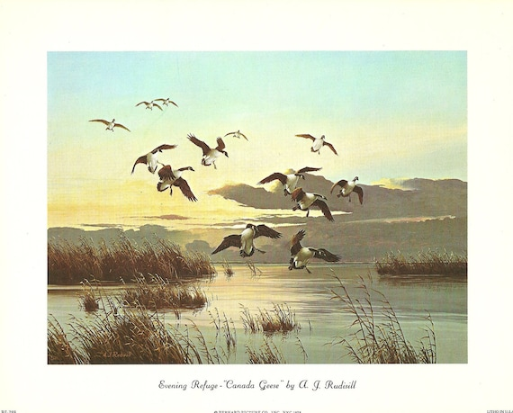 "SALE Evening Refuge Canada Geese By A. J. Rudisill 8"" x 10"" Unframed print Bernard Picture Co 1970s"