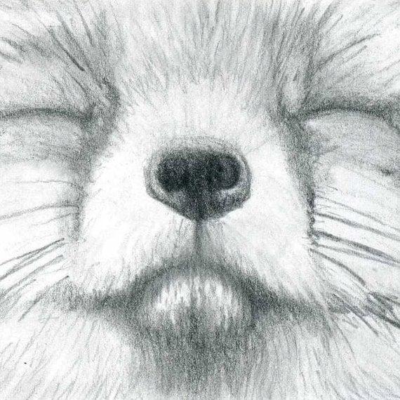 Fox Pencil Drawing Realistic Pencil Drawing