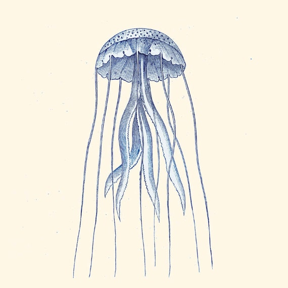 Vintage jellyfish illustration - photo#8