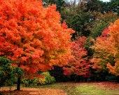 "North Georgia Mountains Fall Color ""Path Into Fall"" 8x10 Print (and larger), Orange Trees, Autumn Landscape Photo"