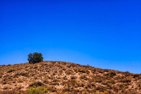 """New Mexico Desert Landscape Photography, 8x10 (or larger) Photographic Print """"Lone Shrub"""""""