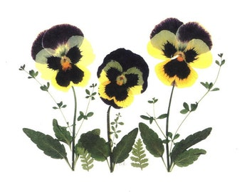 Note Cards - Pansies - Set of 6 Pressed Flower Cards #014