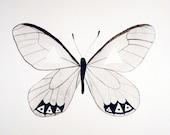 Geometric Butterfly Study - Original Watercolor