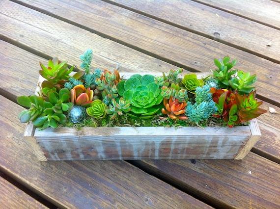 Greens and Oranges Succulent Box