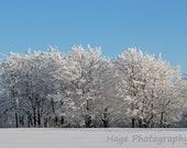 Winter Landscape 8x10 Nature Photograph