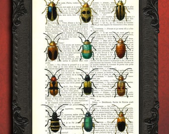 vintage beetle art print insect collection beetle encyclopedia sketch illustration on dictionary page