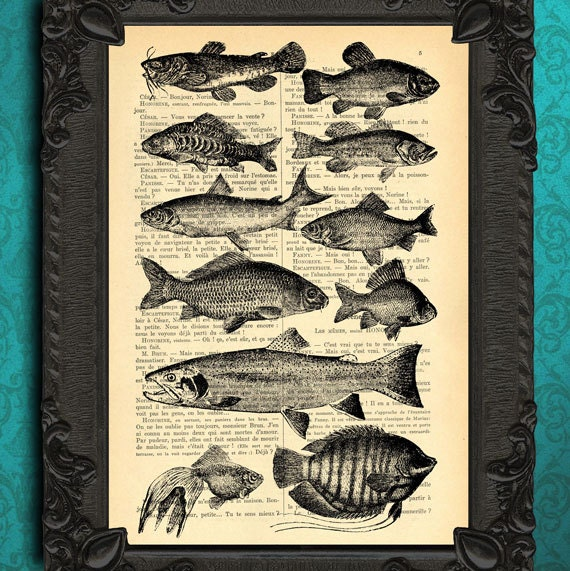 Fish species, fish chart encyclopedia black white fishes poster vintage fish home decor dictionary print book page art ocean life