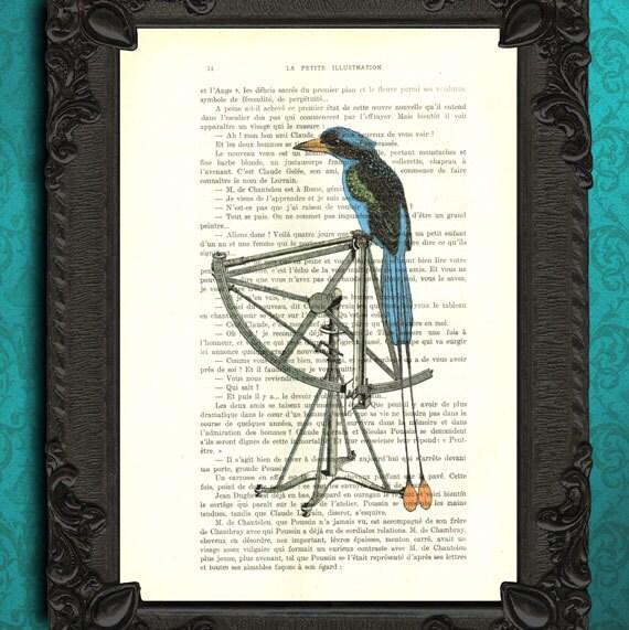 Bird Of Paradise Art Print Vintage Blue Bird Home Decor