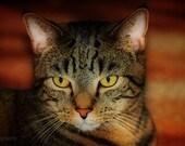 Digital HDR cat print, wall art, wall decor, nursery decor, digital download