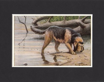 Otterhound 1919 Vintage Dog Print by Louis Agassiz Fuertes Small Print of a Signed Painting - Mounted with Mat