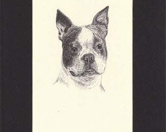 Boston Terrier  Vintage Dog Print C.Francis Wardle Genuine 1935 Drawing Print Mounted with Mat Boston Terrier Dog