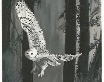 Ghost in Torrit Woods, Snowy Owl