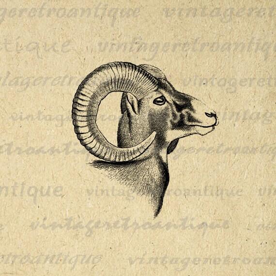 Digital Graphic Goat Download Ram Horns by VintageRetroAntique