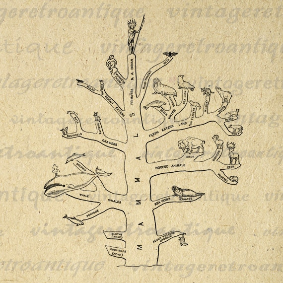 Tree of Evolution Image Printable Download by ...
