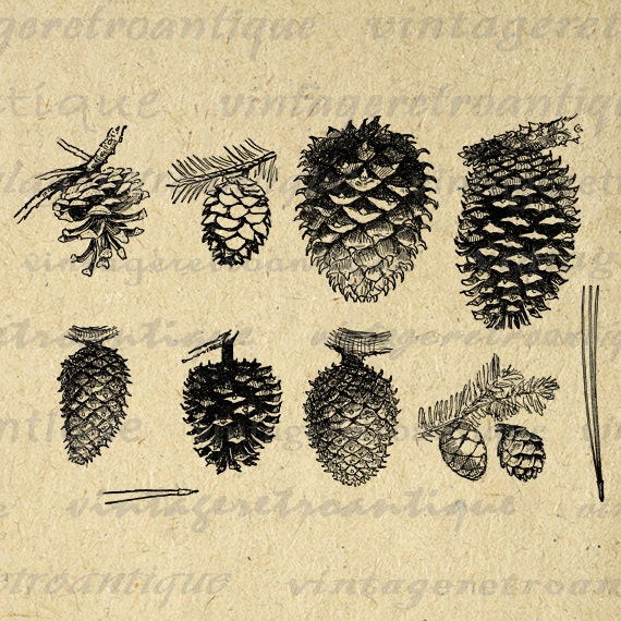 Pinecone Collection Printable Digital Image By Vintageretroantique