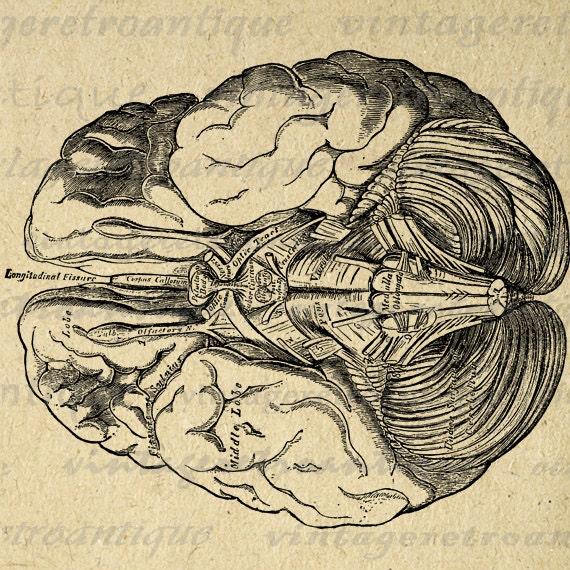 Brain Digital Printabl...