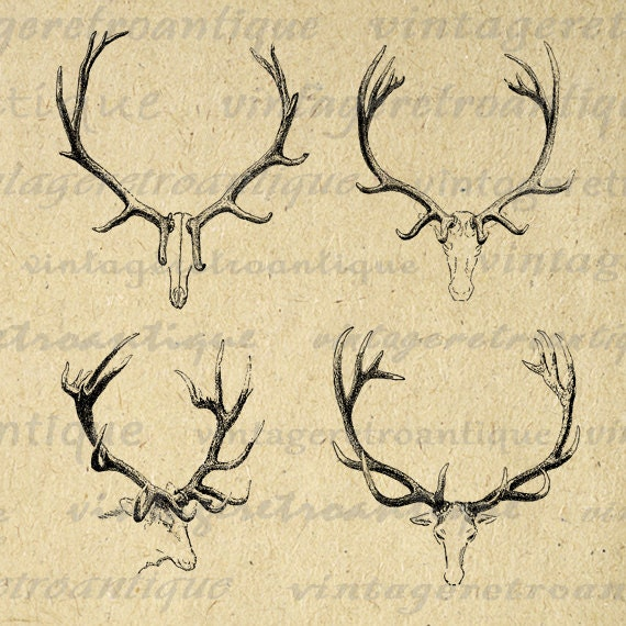 picture regarding Printable Deer Antlers identify Printable Electronic Deer Antlers Impression Collage Sheet Picture