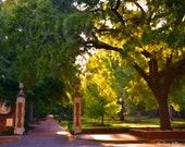 University of South Carolina's historic Horseshoe in Columbia (12 x 16 canvas)
