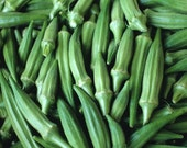 Clemson Spineless Okra Seeds - Organic Heirloom - Green - 25 Seeds