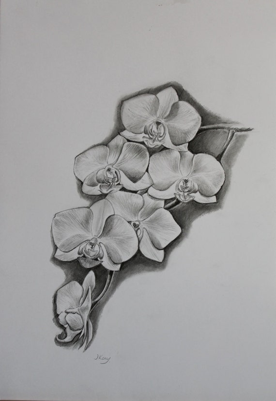 Items similar to White Orchid - Original Pencil Drawing by ...  Items similar t...