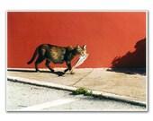 Cat with Fish, 5x7'  Photography,  Fine Art, Nursery Room, Nursery Art, Home decor