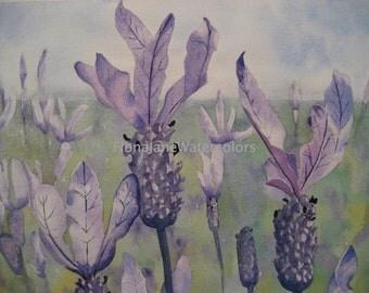 Original-Lavender
