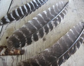 3 Cruelty Free Turkey Wing Feathers
