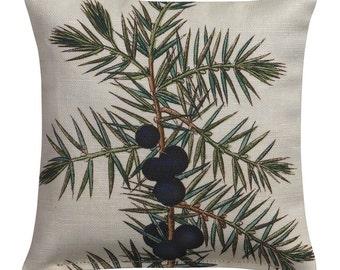 Juniper Pine with Dark Blue Berries Illustrated Balsam Sachet