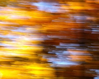 Fall Leaves - Photographic Print