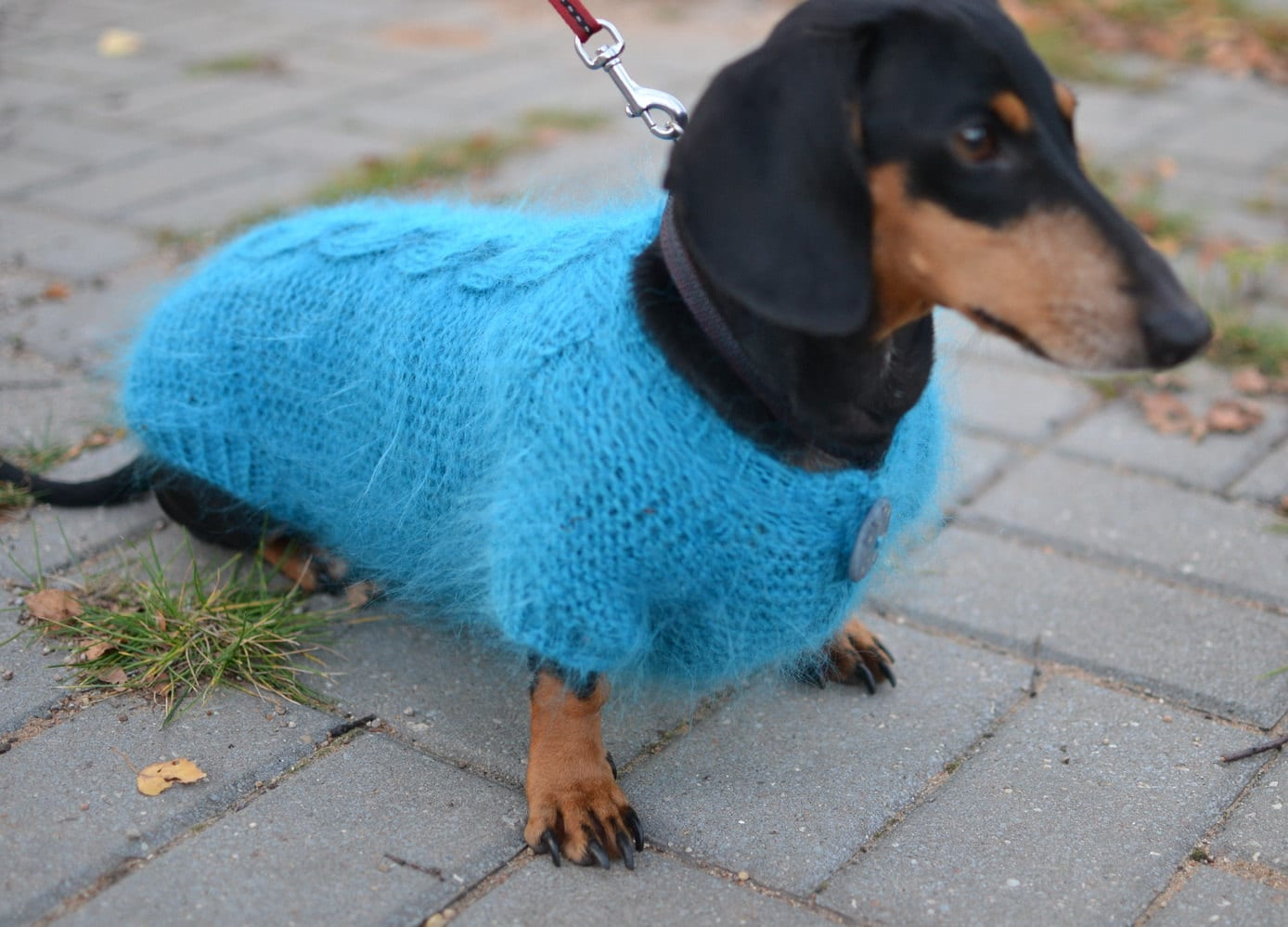 Knitting Pattern For Dachshund Dog : Dog Sweater dachshund Clothes Warm Hand Knitting by Puppy1Love