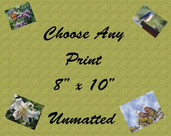 """Choose any photo. Print size  8"""" x 10"""". Unmatted. Free Shipping. (USA Only)"""