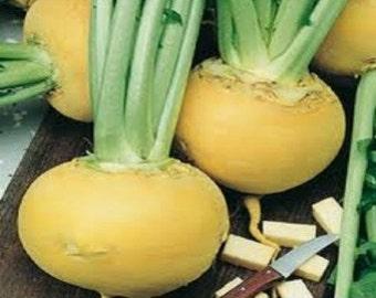 Golden Turnip heirloom seeds - easy to grow vegetable seeds