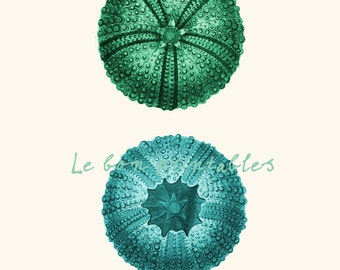 Printable art sea urchin blue and green a8x11 instant download