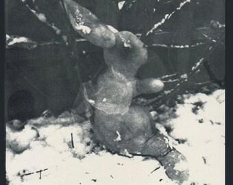 Fairy Rabbit print.   Snow Fairy Rabbit, photographic print by Annie Taylor