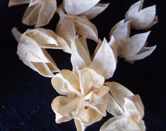 White Hibiscus Pods bleached - 2 quarts  - Potpourri Supplies- Crafting Supplies