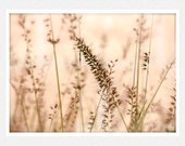 Nature Photography, pale pink, brown grasses, Winter Pink, nature wall decor fine art photography print