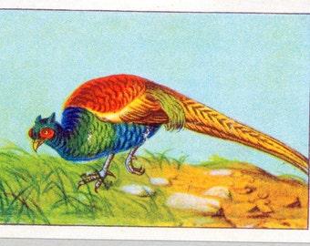 1932 Vintage Spanish Sheet of Illustrations on Pheasants. Sheet 25