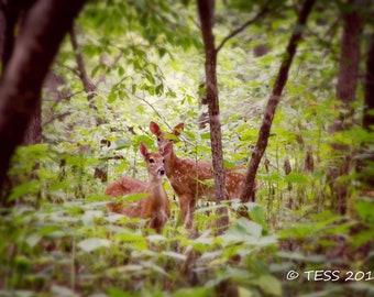 Spotted Fawn Photography - Baby Deer Photo- Fawn Photography - Fawn Photo -  Nature - Woodland Deer