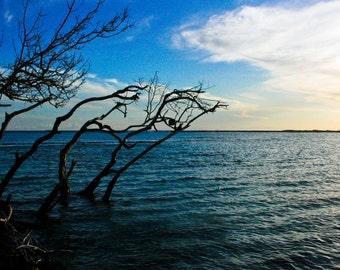 Photograph of Blue Caribbean Sea and Dark Tree Branches in Tropical Warm Aruba Beach Coastal Nautical Horizontal Art Print Home Decor