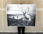 Deer Herd - 36x48 Plotter Poster