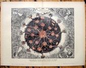 1900 volcano original antique celestial astronomy print