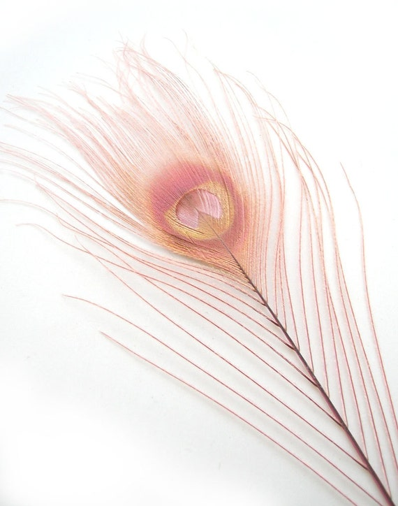 DUSTY ROSE Pink Peacock Feather Eyes (12 Piece,2 size option)(R) Pristine feather for boutonnieres,earrings,wedding bouquets,millinery hat