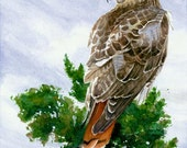 Red-Tail Hawk - Open edition print of an original watercolor (fits 11x14 frame)