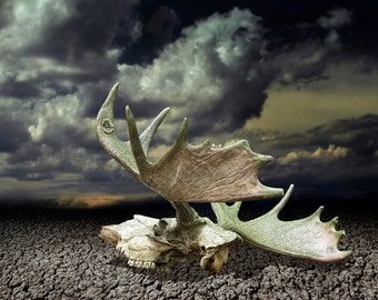 Moose Skull with Antlers on Dry Parched Earth with Dramatic Sky No.4 - A Fine Art Wildlife Landscape Animal Photograph