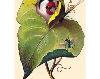 Bird Greeting Card Chases Bug Head Pops Through Leaf