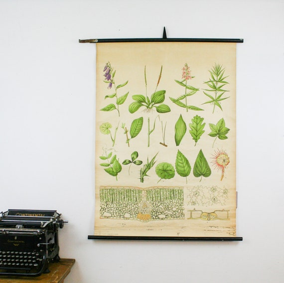 Vintage Botanical Chart, Leaves, Genuine Vintage School Chart