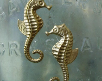 Bottle Nosed Seahorse  (2 pair)