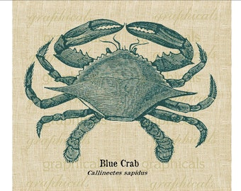 Vintage blue crab instant digital download image for iron on transfer to fabric burlap decoupage paper pillow card tote bag towel No. 593