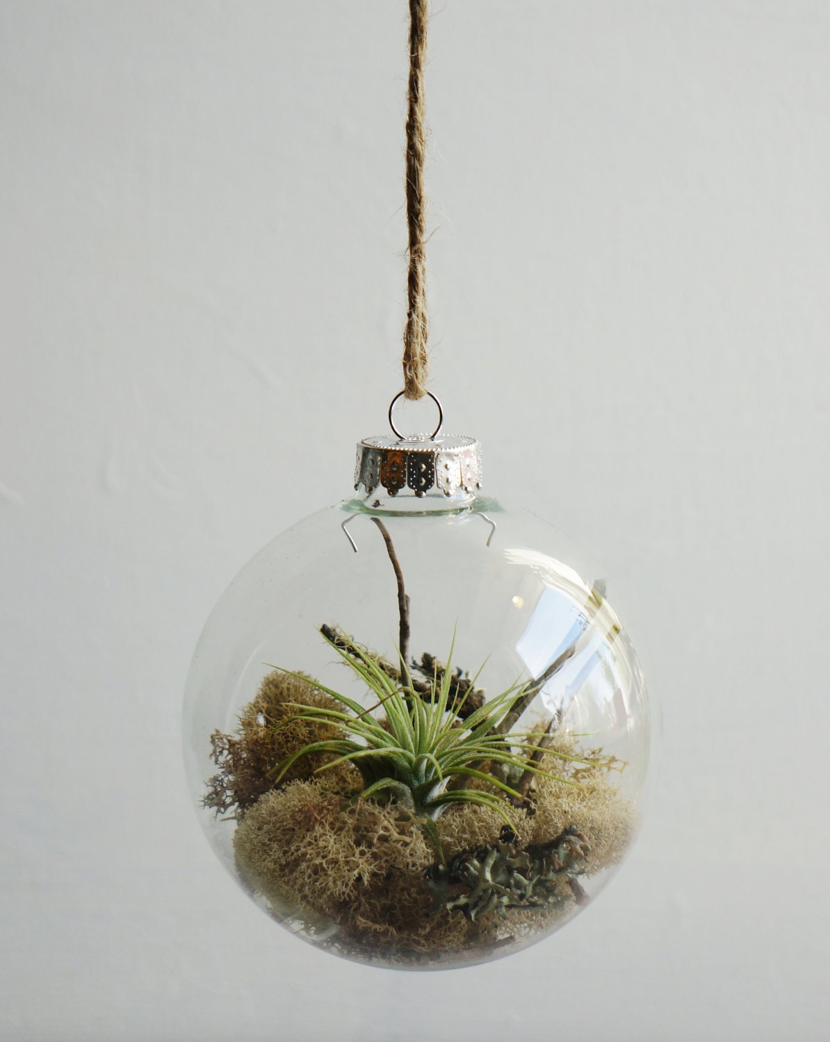 Air plant glass ornament live reindeer by