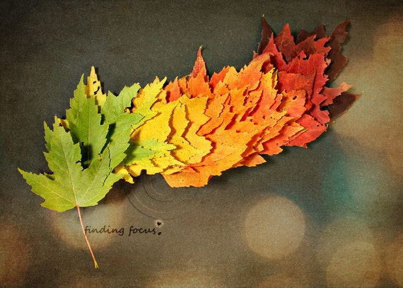 Leaf Photograph, Autumn Season Fall Print, Green Yellow Peach Orange Red Brown Changing Maple Leaves Nature Art Photography Ombre Home Decor